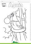 Desenho para Colorir – Animais - Águia