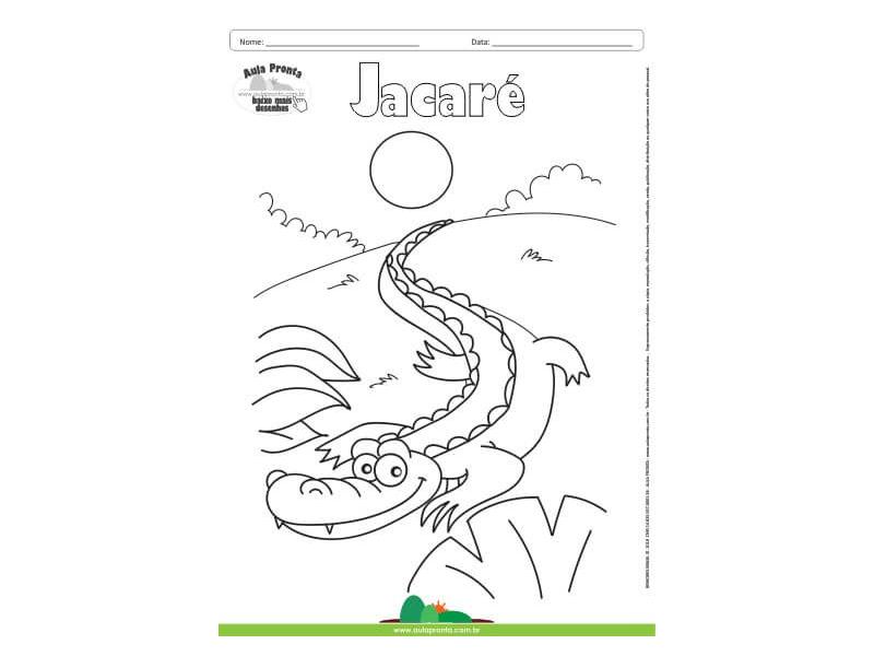 Desenho Para Colorir Animais Jacare Aula Pronta